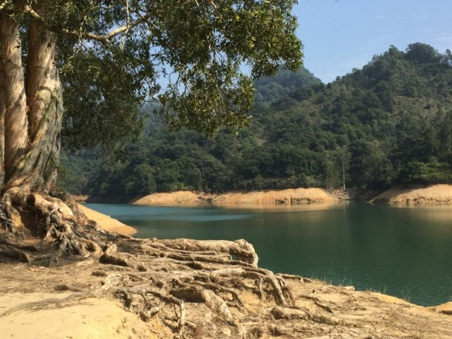 Hiking 1.1.16 Shing Mun (4)