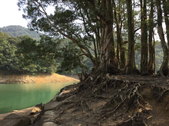Hiking 1.1.16 Shing Mun (8)