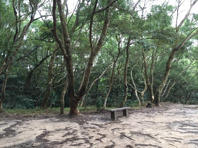 Hiking 17.1.16  Ng Fai Tin (11)