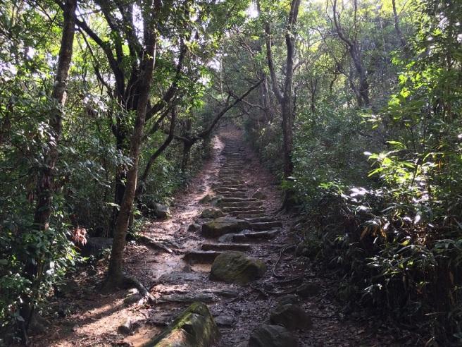 Hiking 17.1.16  Ng Fai Tin (4).JPG