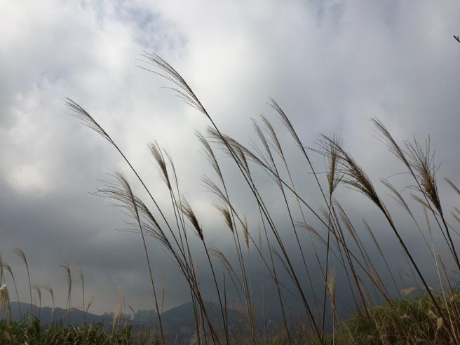 Hiking 17.1.16  Ng Fai Tin (5)