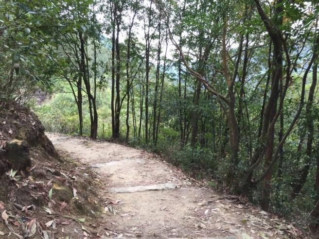 Hiking 5.3.16 Shing Mum (6).jpg