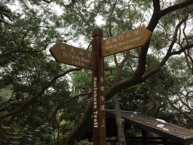 Hiking 5.3.16 Shing Mum (7)