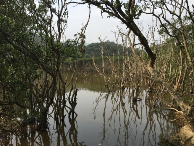 Hiking 2.4.16 Nam Chung (17)