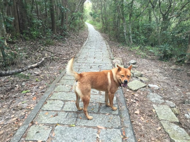 Hiking 4.4.16 Pak Ma Tsui (10).jpg