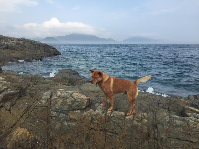 Hiking 4.4.16 Pak Ma Tsui (14)