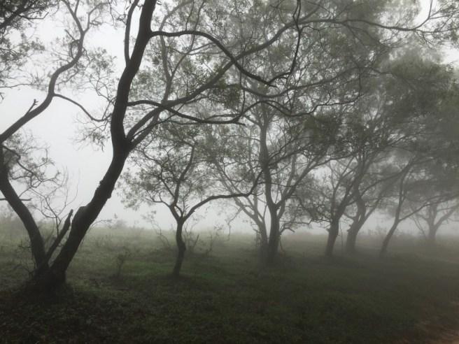 Hiking 7.4.16 Ngong Ping (7)