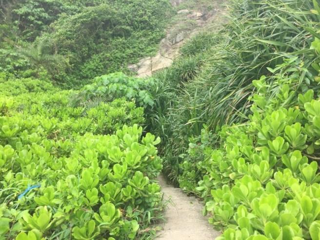Hiking 2.5.16 Cape D'Aguilar (14).jpg
