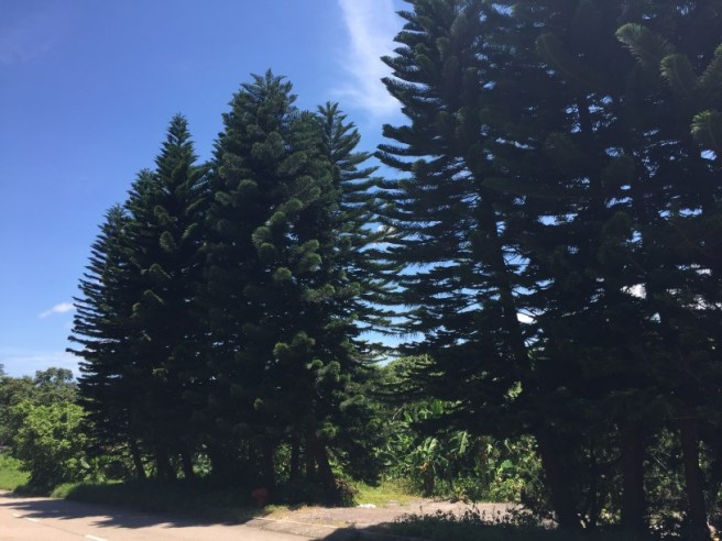 Hiking 25.6.16 Mau Ping (1)