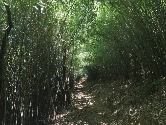 Hiking 25.6.16 Mau Ping (19).JPG