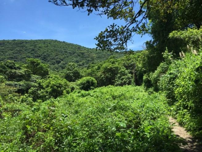 Hiking 25.6.16 Mau Ping (3)