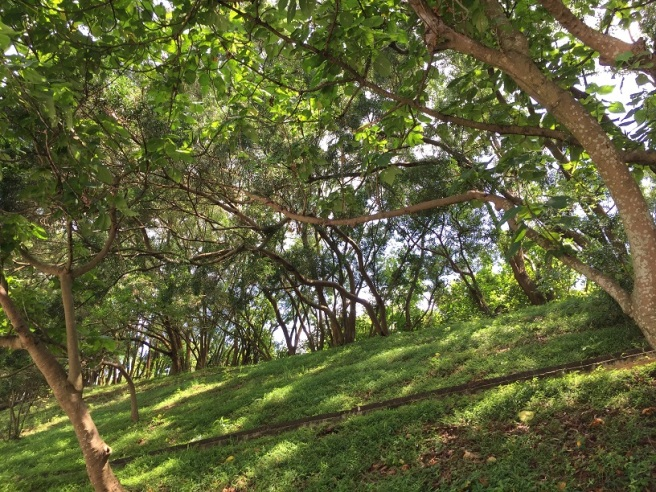 Hiking 4.6.16 Tsing Yi Nature Trail (10)