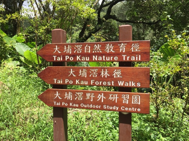 Hiking 1.7.16 Tai Po Kau (2)