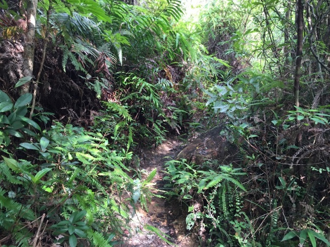 Hiking 10.7.16 Po Kwu Wan (14).JPG