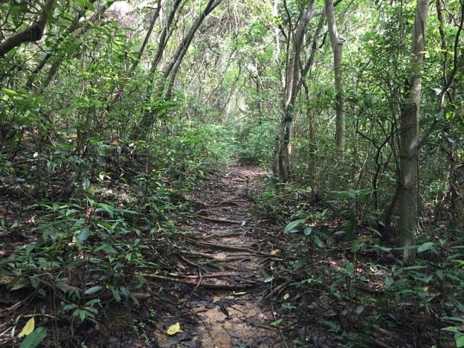 Hiking 10.7.16 Po Kwu Wan (15).JPG