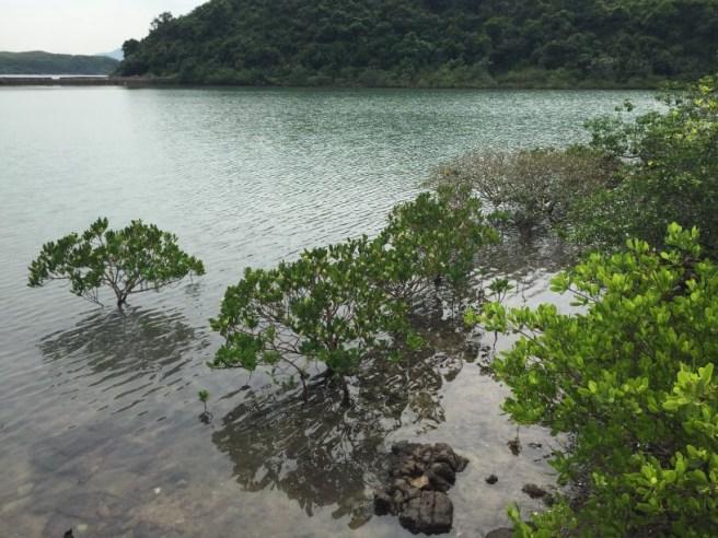 Hiking 10.7.16 Po Kwu Wan (6)