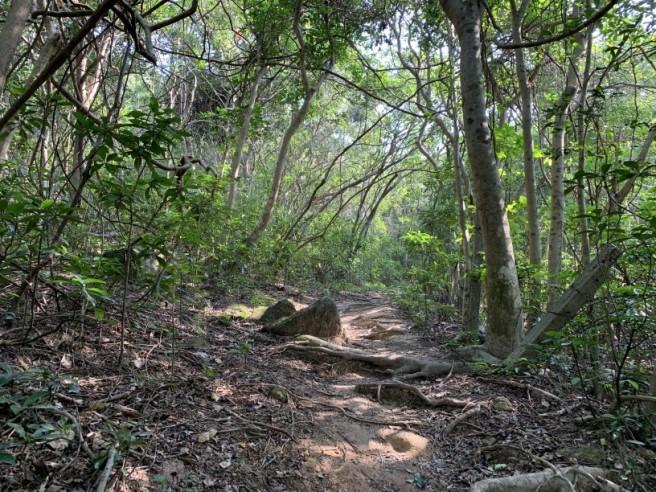 hiking 26.1.2019 po kwu wan (14)