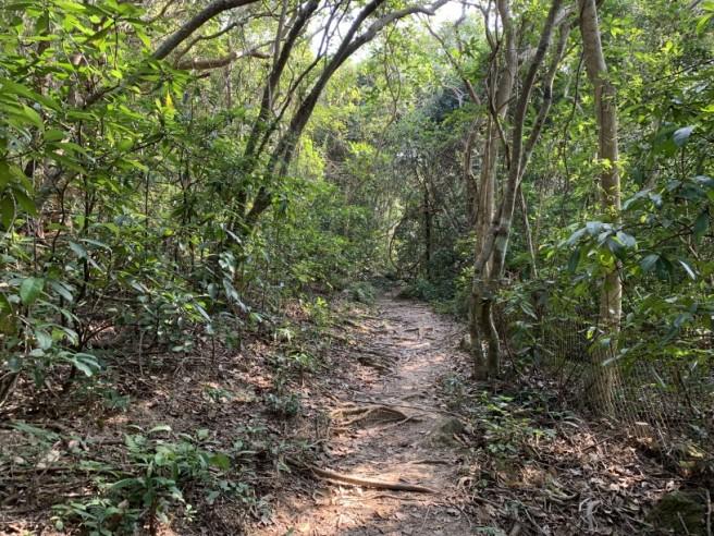 hiking 26.1.2019 po kwu wan (15)