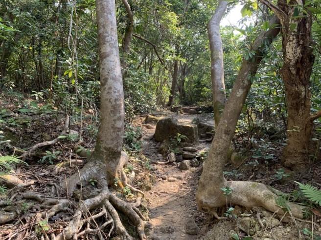 hiking 26.1.2019 po kwu wan (16)