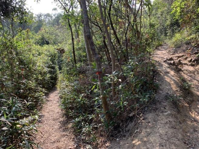 Hiking 26.1.2019 Po Kwu Wan (17).jpg
