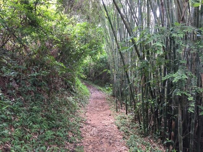 hiking-13-8-16-ho-pui-28