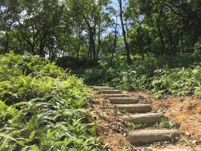 Hiking 6.8.16 Lo Yan Shan (5)