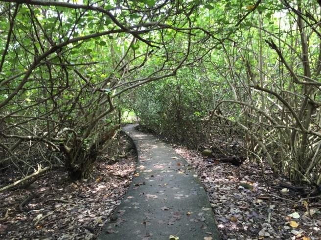 Hiking 3.9.16 Shui Long Wo (27)