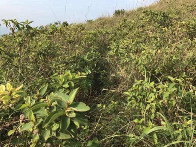 hiking-30-10-16-ko-lau-wan-33