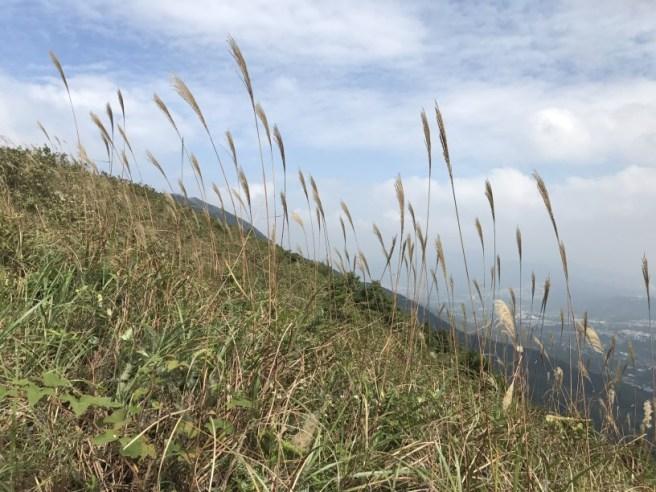 hiking-13-11-16-tai-to-yan-10
