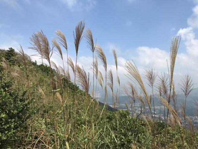 hiking-13-11-16-tai-to-yan-25