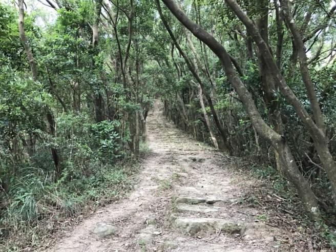 hiking-13-11-16-tai-to-yan-3