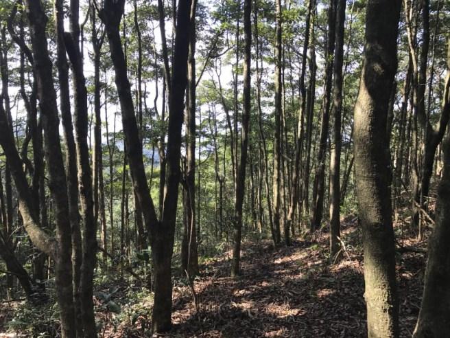 hiking-13-11-16-tai-to-yan-32