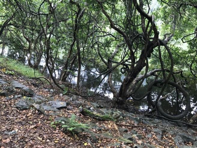 hiking-19-11-16-lau-shui-heung-12