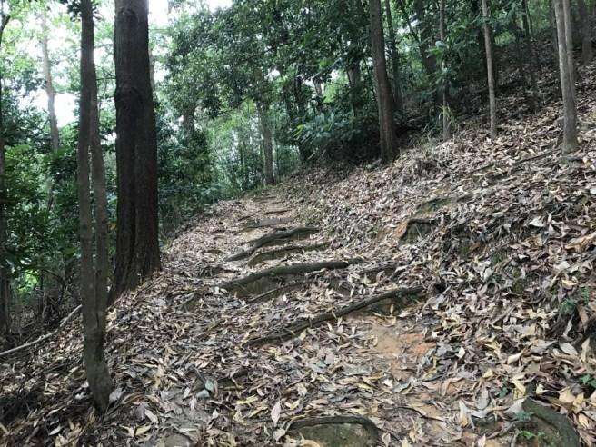hiking-19-11-16-lau-shui-heung-28