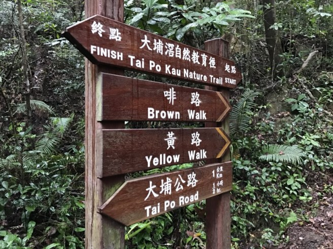 hiking-14-1-17-tai-po-kau-brown-1