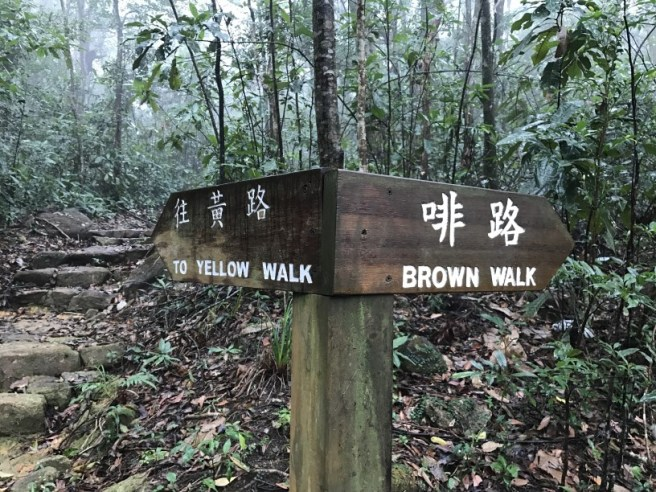 hiking-14-1-17-tai-po-kau-brown-6