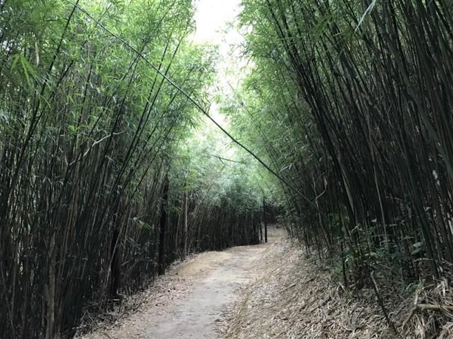 hiking-26-2-17-yuen-tun-19