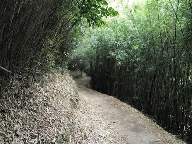 hiking-26-2-17-yuen-tun-20