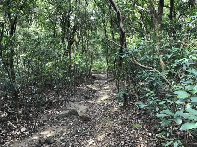 hiking-5-2-2017-tai-tun-17