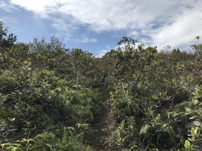 hiking-5-2-2017-tai-tun-2