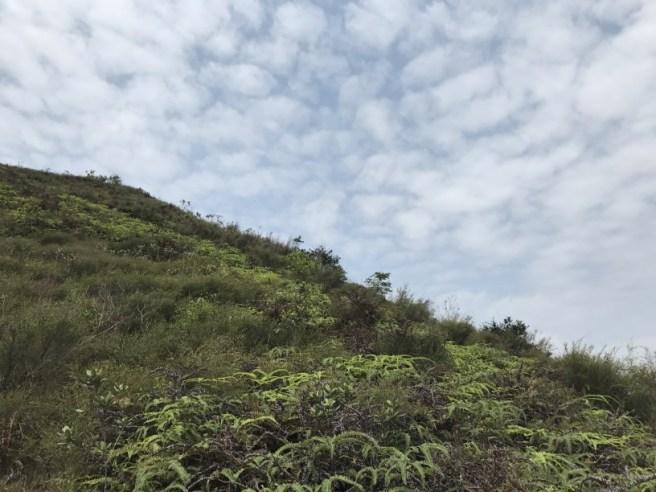 Hiking 15.4.2017 Ki Lun Shan (17)