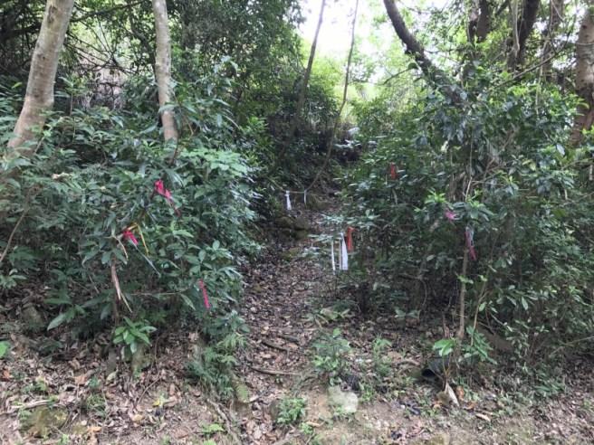 Hiking 15.4.2017 Ki Lun Shan (35)