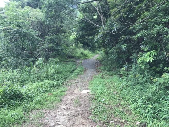 Hiking 29.4.17 Tai Mo Shan (10)