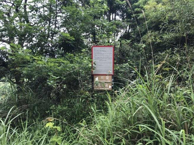 Hiking 29.4.17 Tai Mo Shan (11)