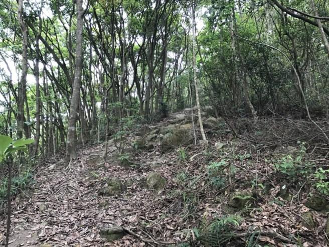 Hiking 29.4.17 Tai Mo Shan (13)