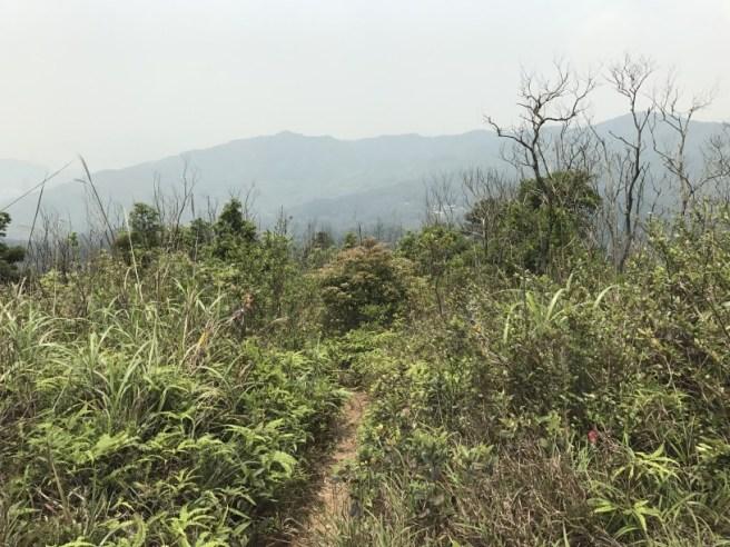Hiking 29.4.17 Tai Mo Shan (15)