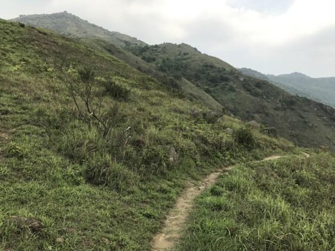 Hiking 29.4.17 Tai Mo Shan (24)