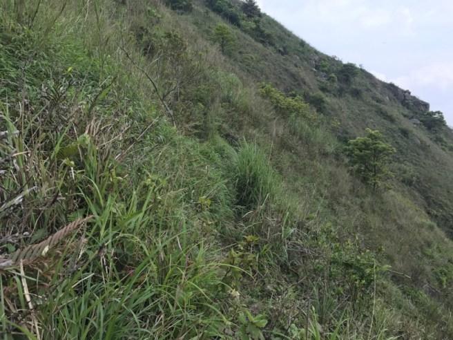 Hiking 29.4.17 Tai Mo Shan (25)