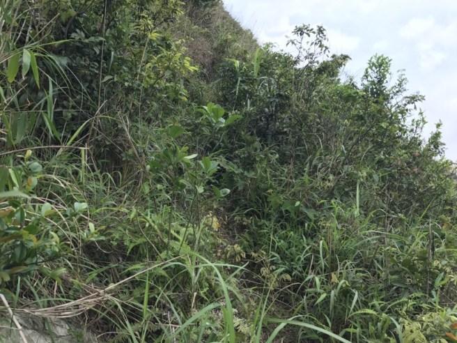 Hiking 29.4.17 Tai Mo Shan (30)