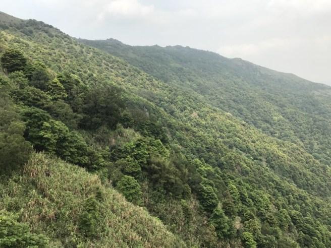Hiking 29.4.17 Tai Mo Shan (32)